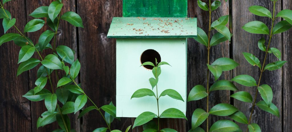 Green birdhouse hanging on reclaimed wood fence surrounded by lush climbing foliage.